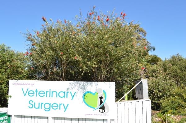 Entrance to Batemans Bay Veterinary Clinic
